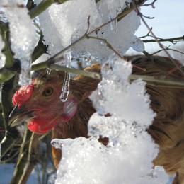 Gelo siberiano, agricoltura a rischio