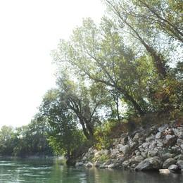 Una giungla galleggiante sull'Adda
