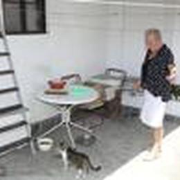 Strage di gatti a Camairago