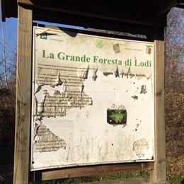 """Foresta di città a Lodi, che fallimento: un """"polmone"""" in pieno degrado"""