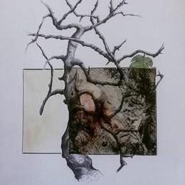 Slanciati verso il cielo ma piantati nella terra: a Casale una mostra-omaggio sugli alberi
