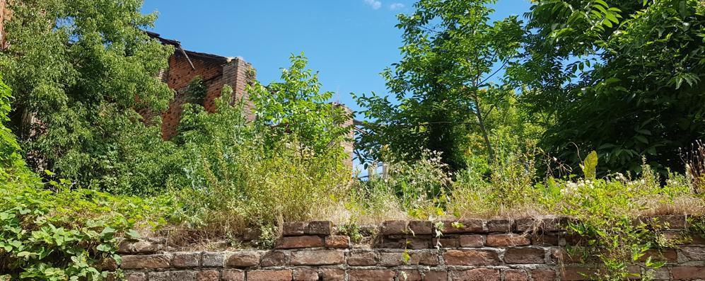 Sant'Angelo: all'ex Manzoni c'è una foresta di città