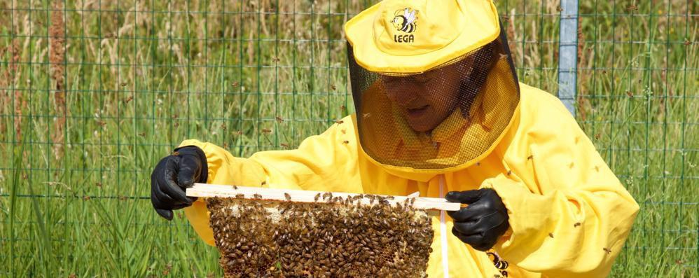 Lodi, l'Università di Veterinaria studia la qualità dell'aria grazie alle api