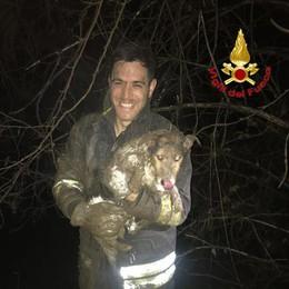 Cane resta incastrato, lo salvano i vigili del fuoco. GUARDA IL VIDEO