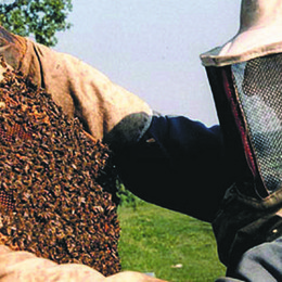 Il Parco Adda Sud lancia l'allarme per le api: il numero è diminuito