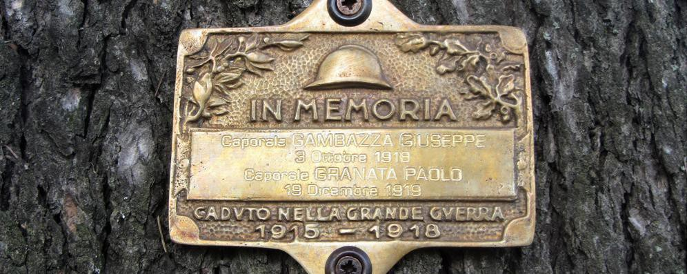 Ora gli alberi di Codogno conservano il ricordo dei soldati morti nella Grande guerra