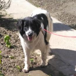 Cane salvato a Parma, era fuggito dalla Bassa