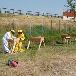 """A Comazzo nasce la """"Città delle api"""""""