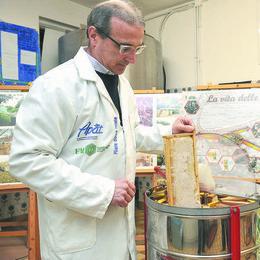 Clima impazzito e colture di mais, il miele di acacia sta scomparendo