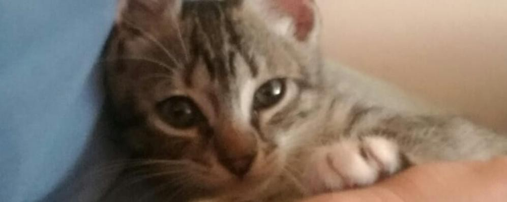 Estate nera per i gatti: nel Sudmilano abbandonati 53 felini