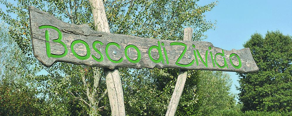 «Il bosco di Zivido sta bruciando», ma è una burla di cattivo gusto sui social
