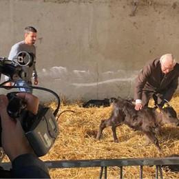La storica cascina Cigolina in tv con la carne Wagyu e il suo latte
