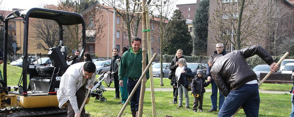 """LA LETTERA """"Signori sindaci, piantate alberi"""": «È un appello che non ammette deroghe»"""
