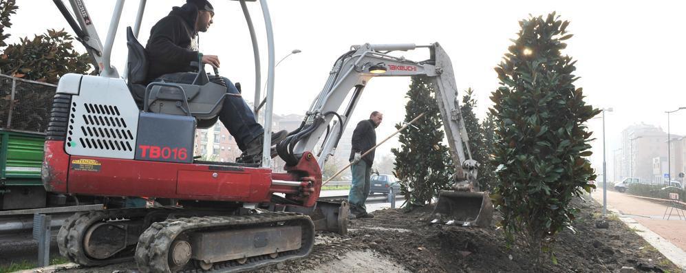 Cari sindaci, piantate alberi: fatelo per i vostri/nostri figli