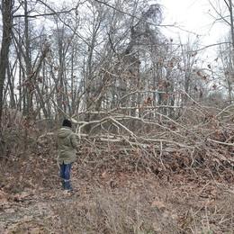 Quanti alberi feriti, dopo il maltempo la foresta di pianura sembra un cimitero