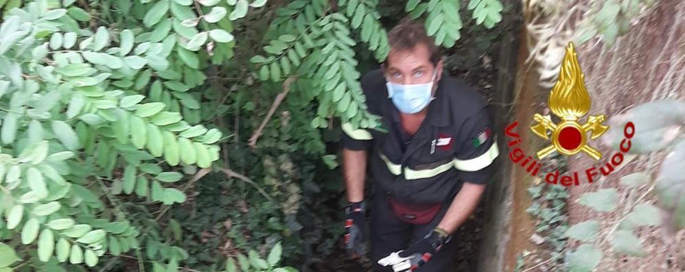 Lodi, ritrovata in un fosso l'81enne scomparsa. VIDEO