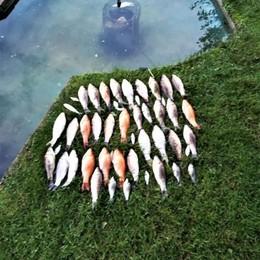 Strage di pesci in un giardino di San Colombano: sotto accusa il disinfettante