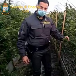 Borghetto, scoperta una gigantesca piantagione di marijuana FOTO E VIDEO