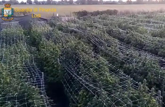 La piantagione nei campo di Borghetto
