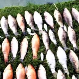 Il caso dei pesci morti nelle fontane a San Colombano, l'Ats: troppo cloro nell'acquedotto