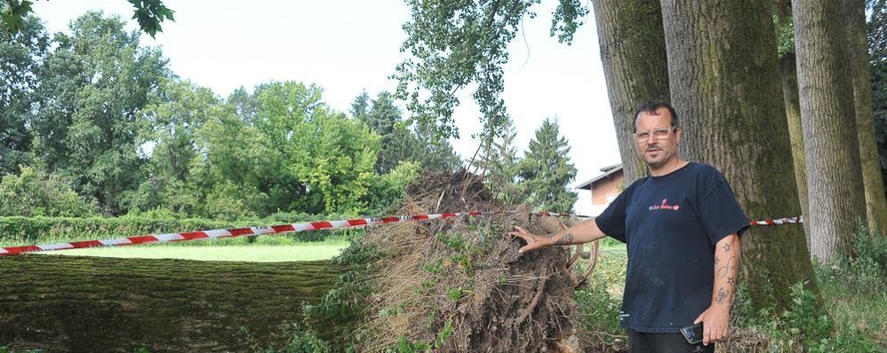 Cerca di tagliare l'albero crollato e si amputa un dito con la motosega