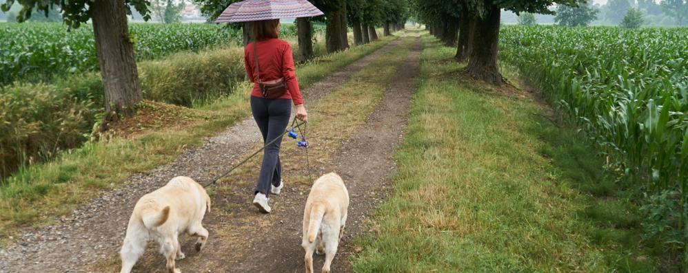 Lodi, allarme polpette avvelenate: cani in pericolo tra Torretta e le Fanfani
