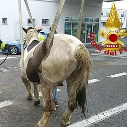 Un cavallo soccorso lungo l'Autosole