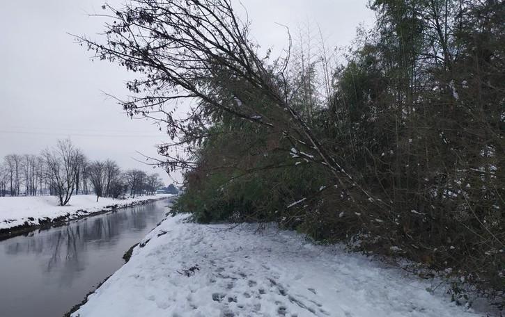 Alberi crollano sotto il peso della neve sulla ciclabile