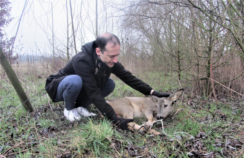 Giuseppe Monticelli di Codogno, volontario Enpa, con il capriolo ferito