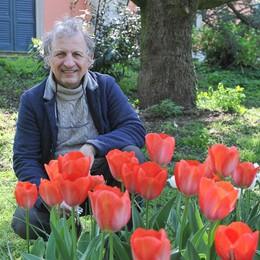 Massalengo, nessun spettatore per la fioritura dei tulipani di Villa Premoli