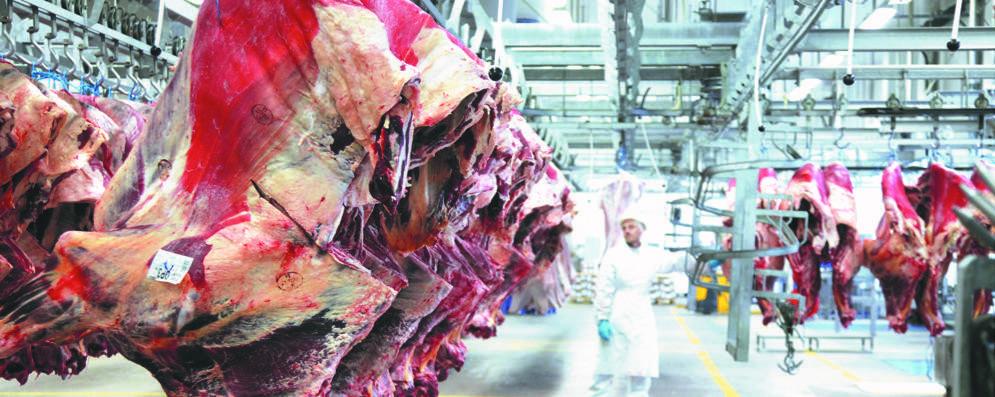Arriva il via libera alla maxi logistica della carne a Ospedaletto