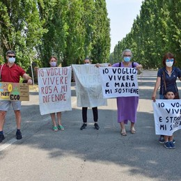 """Peschiera, i pioppi non si toccano:  i cittadini """"adottano"""" i 240 alberi"""