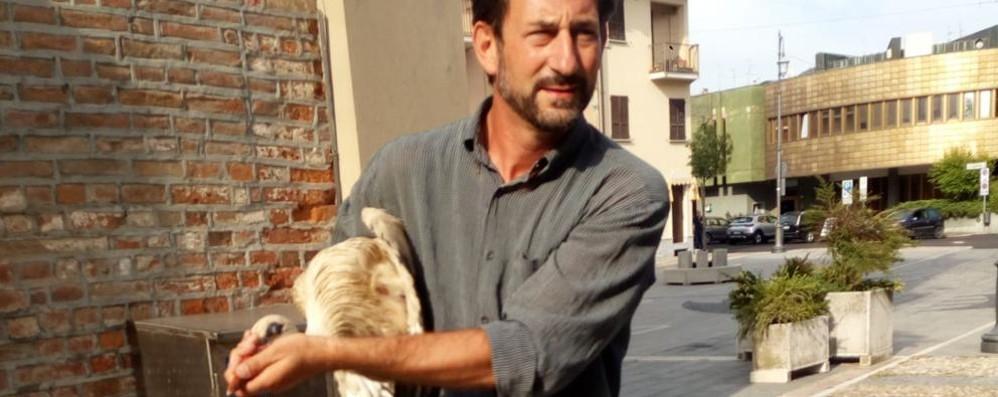 Guardamiglio,salvata la baby cicogna