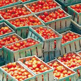 """Agricoltura, parte la campagna di raccolta dell'""""oro rosso"""""""