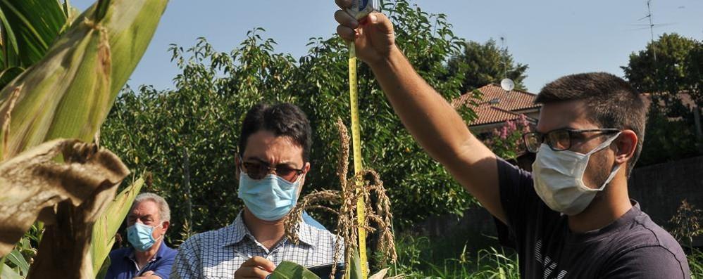 """Caccia ai semi dei nostri nonni: c'è un """"tesoro"""" a San Colombano"""