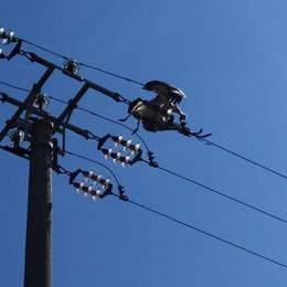 CASTIGLIONE Un'altra cicogna folgorata  sui cavi elettrici