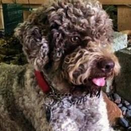 Carpiano, il cagnolino Ugo testimonial della campagna anti-abbandono