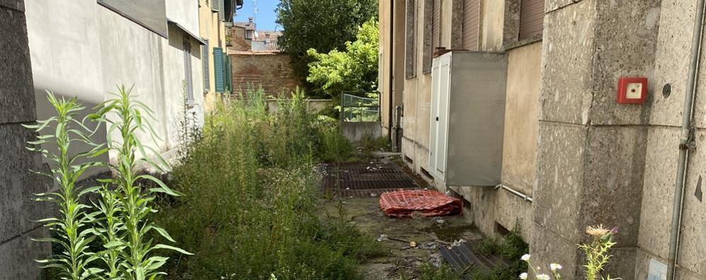 L'ex asilo senza futuro sta diventando una foresta di erbacce