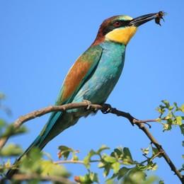 """Il Darwin lodigiano che """"cattura"""" la natura lungo il fiume Adda   con il suo obiettivo"""