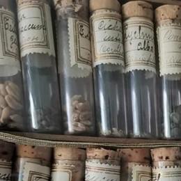 La  collezione dei semi antichi che salva la biodiversità