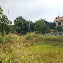 L'erba all'attacco dei terreni incolti, terra di conquista per le zanzare