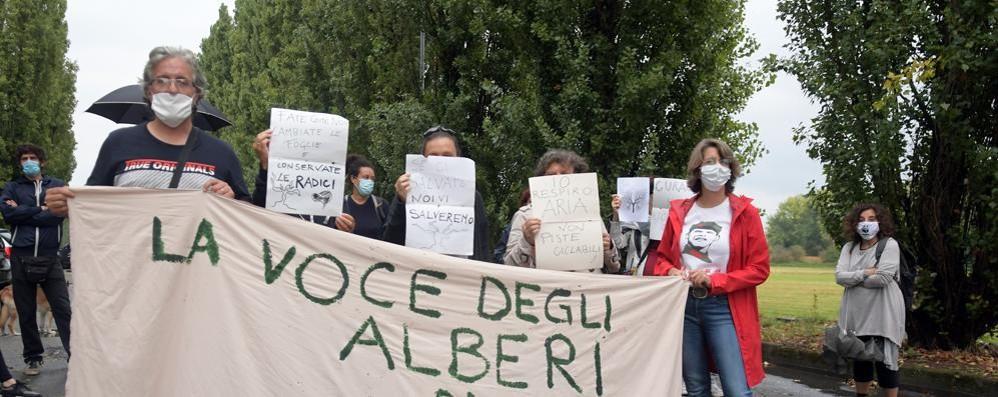 Nuove proteste contro il taglio di 240 pioppi ma il Comune di Peschiera va avanti