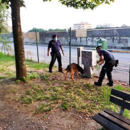 Lodi, a Ferragosto controlli antispaccio nei parchi con il cane antidroga