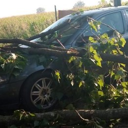 LODI Grosso ramo cade sulla macchina,  ancora piante pericolanti a Riolo