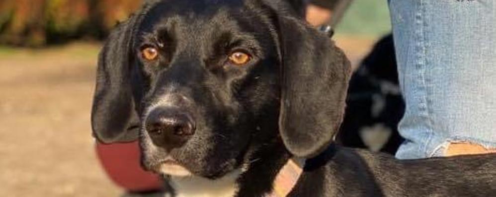 Appello da Zelo per ritrovare Spaghetto, il cane fatto scappare tre mesi fa dai ladri
