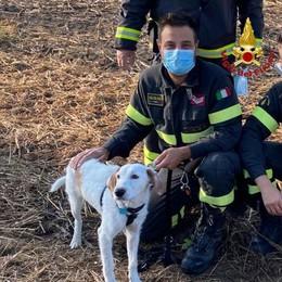 I pompieri di Lodi salvano un cane caduto in un fossato e intrappolato tra i rovi