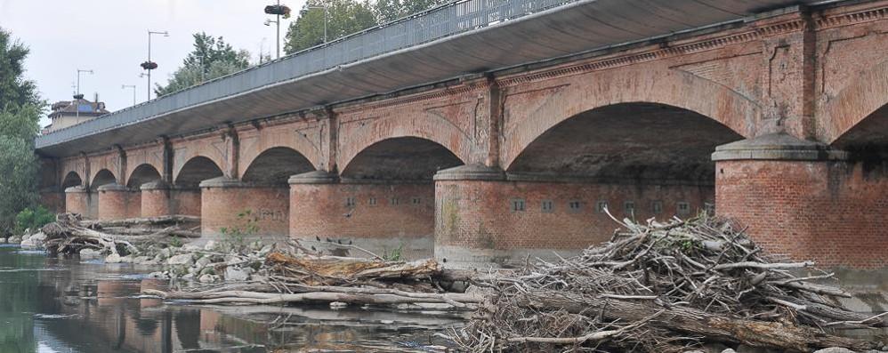 LODI Torna la minaccia dei tronchi accatastati sotto il ponte dell'Adda