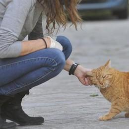 Covid, lo studio lodigiano su cani e gatti: «Prendono il virus ma non si ammalano»