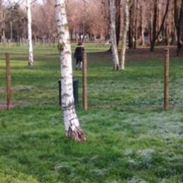 A San Giuliano un'area cani separata per grandi e piccoli