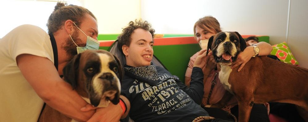 Buone Notizie, boxer e disabili migliori amici: le difficoltà si affrontano anche  così